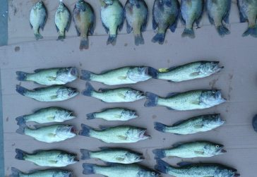 catch and release program results in stunted fish population