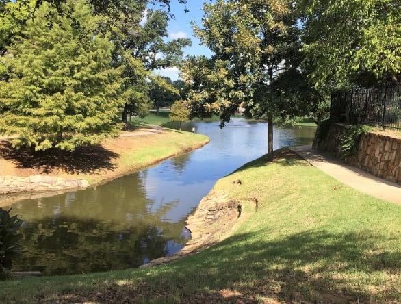 Pond without surface algae