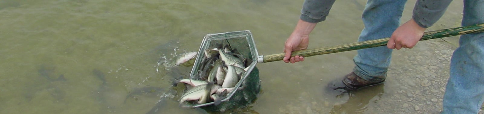 Fish Stocking and Fisheries Management | Magnolia Fisheries