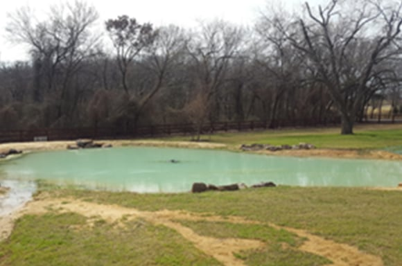 Pond appearance after Alum is sprayed